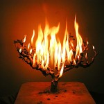 blog_burning_bush